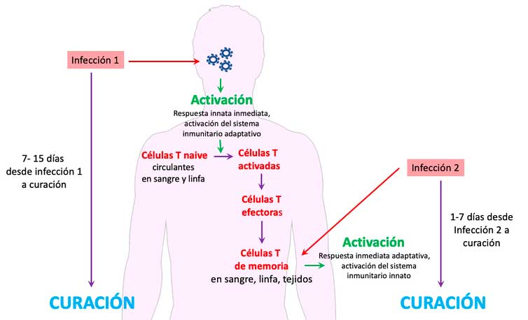 Células T al rescate
