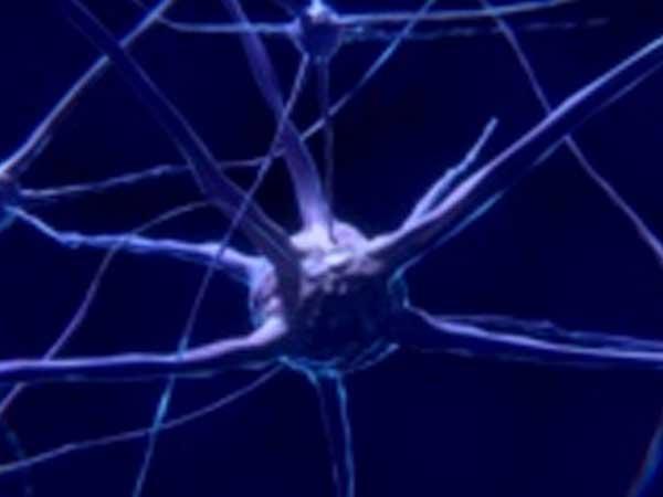 El cerebro estaría conectado con el cosmos a escala cuántica