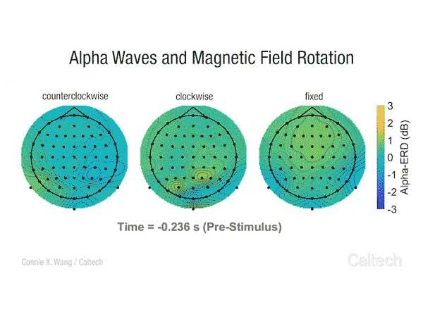 Nuestro cerebro reacciona a las variaciones del campo magnético terrestre