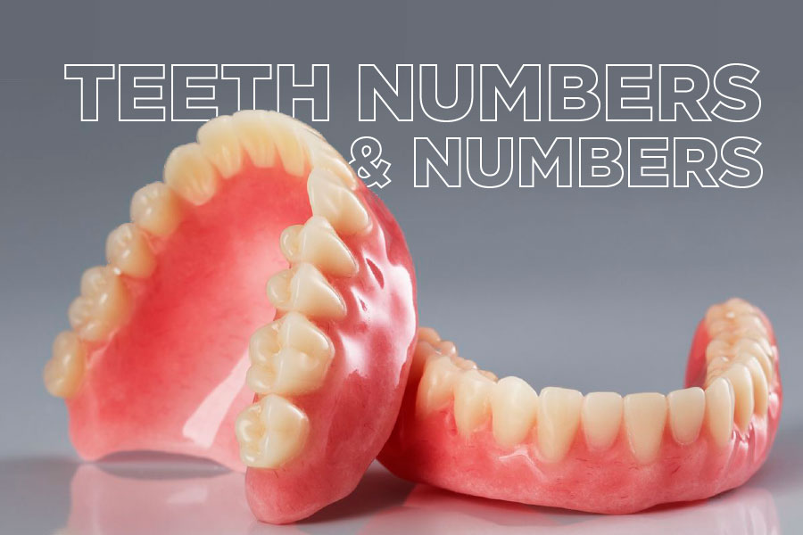 Teeth Numbers And Names: A First Step In Understanding Your Treatment Plan