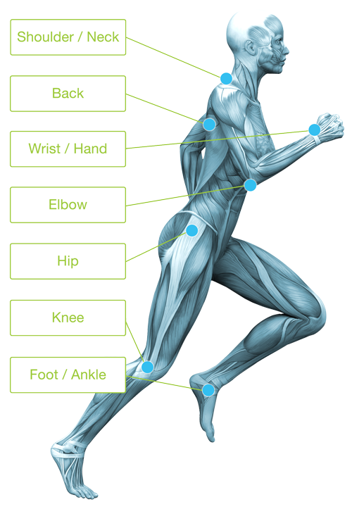 Diagram showing the major joints of the human body