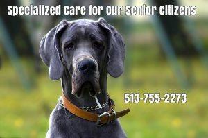 seniordog-care