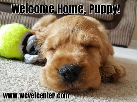 West Chester Veterinary Center New Puppy