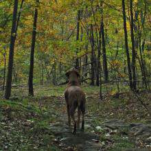 Lyme Disease Information from West Chester Veterinary Center