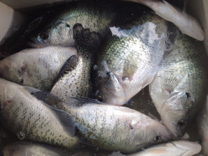 Lake Lewisville Crappie Fish Recipes