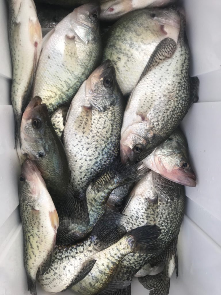 Crappie Fishing in Dallas Texas