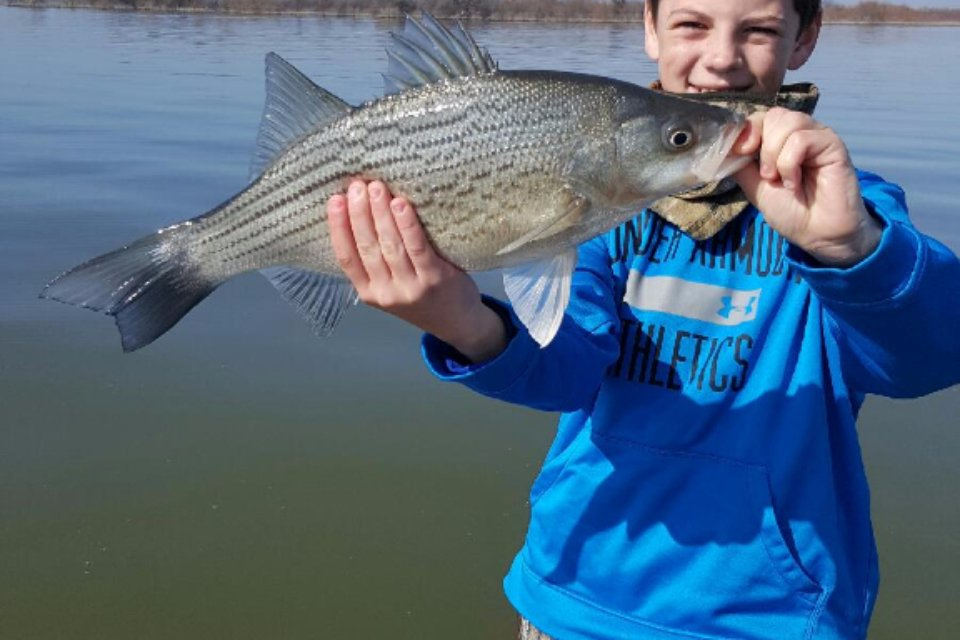 Kids Fishing - Lewisville Hybrid Bass