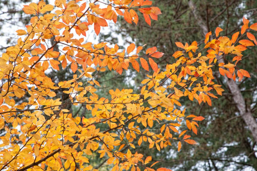 FoliageHarrybrooke