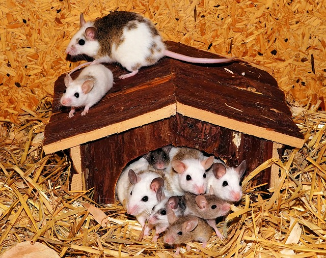 mice in a house