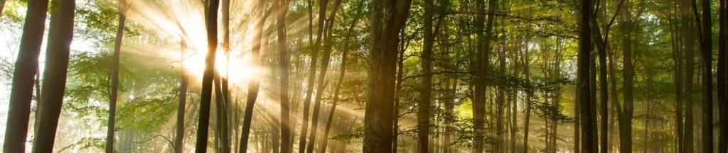 trees with sun shining