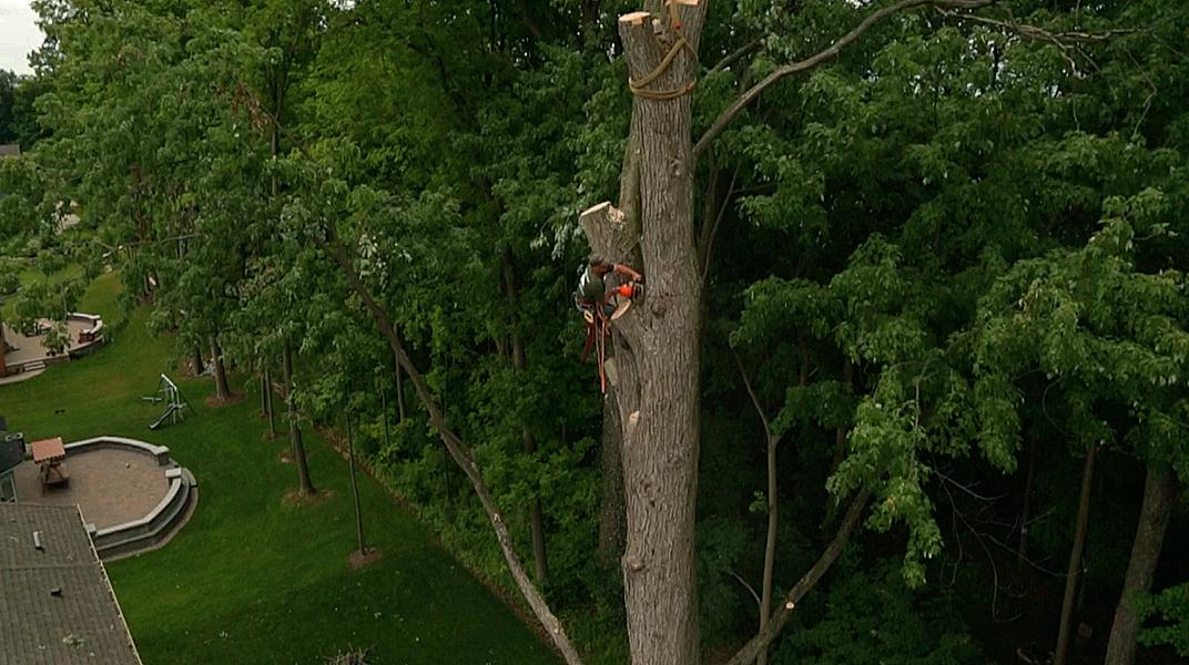 oaklandtreeservicemarkcutting