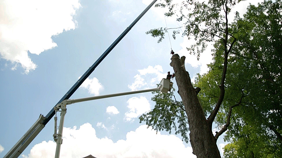 oaklandtreeservicemarkcutting2