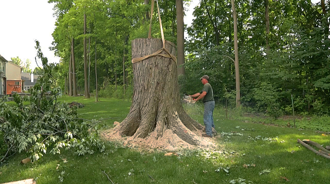 oaklandtreeservicemarkcuttingstump