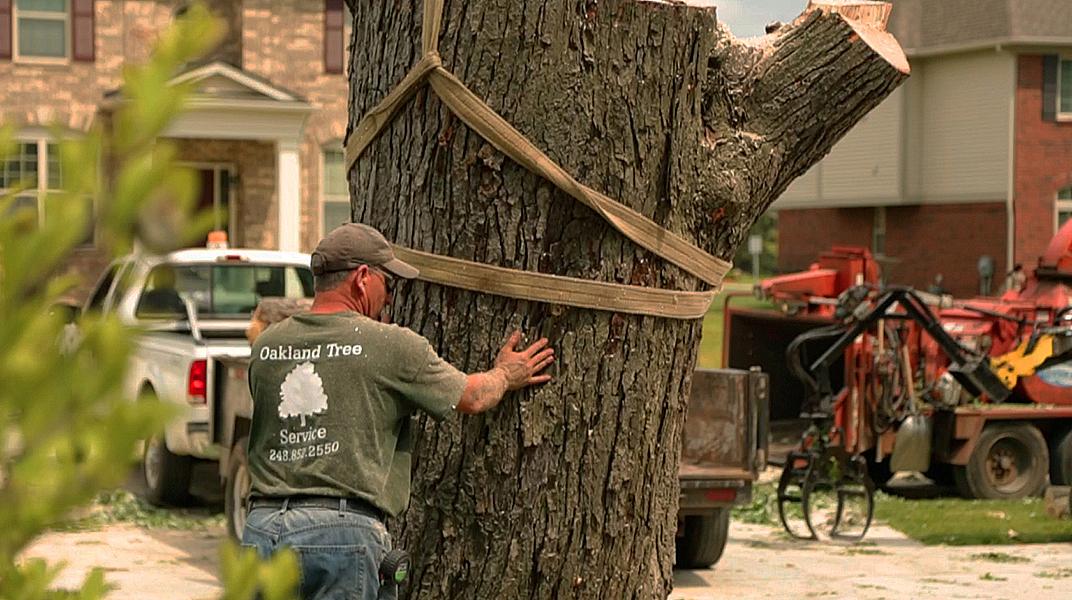 oaklandtreeservicemarkguiding