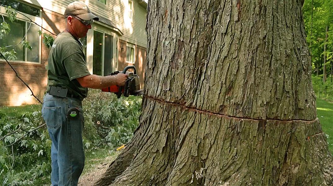 oakland tree service tree removal