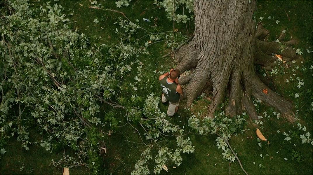 oaklandtreeservicetreetrimming