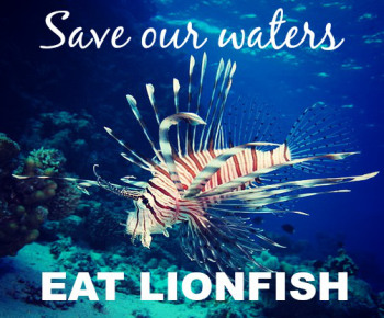 Lionfish Cooking Demo