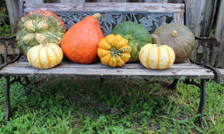 Guide to Winter Squash and Pumpkin Varieties