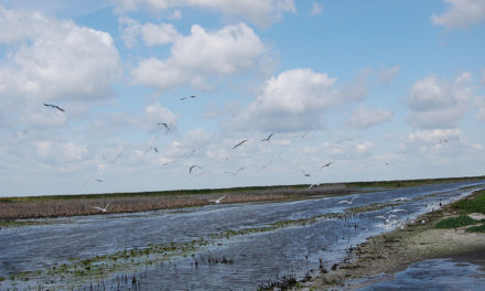 Army Corps of Engineers stops Lake Okeechobee flow into St. Lucie River