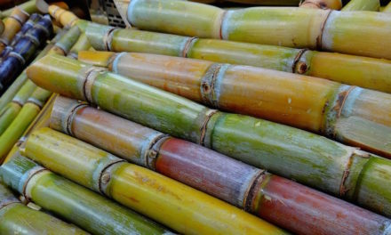 What you need to know about sugar cane