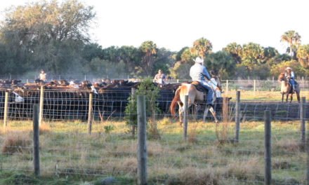 Florida Farm Bureau sponsoring Online Photo Contest