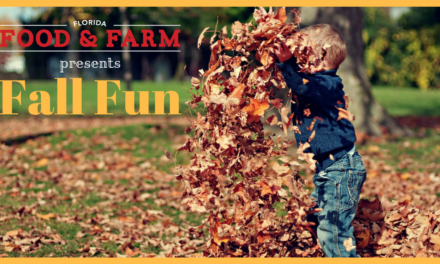 Florida Fall 2019 Fun: Corn Mazes, Harvest Festivals & Pumpkin Patches – Oh, My!