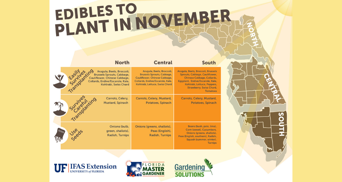 What to plant in November in Florida
