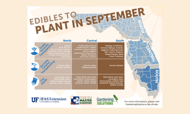 What to plant in September in Florida