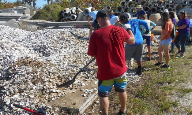Aw, shucks! 'Recycled' oyster shells to find new life as artificial reef