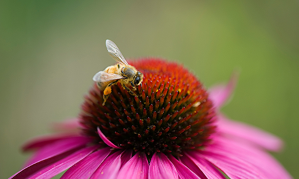 Learn about honey-bees at UF's South Florida Bee College, set for March 8-9 in Davie.