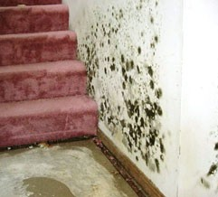 White Plains NY 10603 Mold Removal Testing Inspections Remediation
