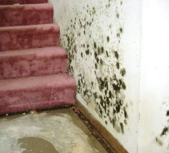 White Plains 10603 Mold Removal Testing Inspections Remediation