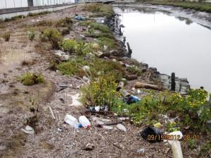 Debris along Colma Creek prior to clean up Photo: Tom Carney