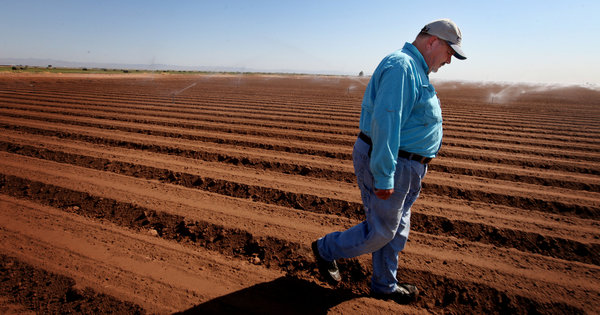 Al Kalin in a field on his farm in Southern California's Imperial Valley. A program offers farmers money to keep land fallow and divert water to cities, but his family has chosen not to participate.  Photo: Sandy Huffaker for The New York Times