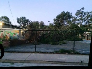 Kayla Gallagher shares this photo of a downed tree on Paradise Valley Rec Ctr Basketball courts
