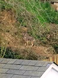 This is behind my house at Larch at Sign Hill Photo: RamonVelia De La Cruz T