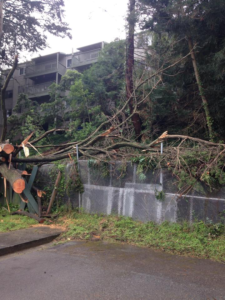 Crown Colony has started clean up from the downed trees Photo courtesy: Cindy Alger