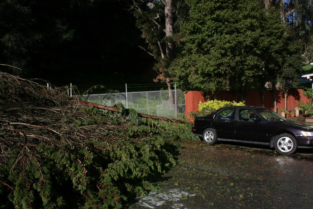 Trees down in West Winston Manor