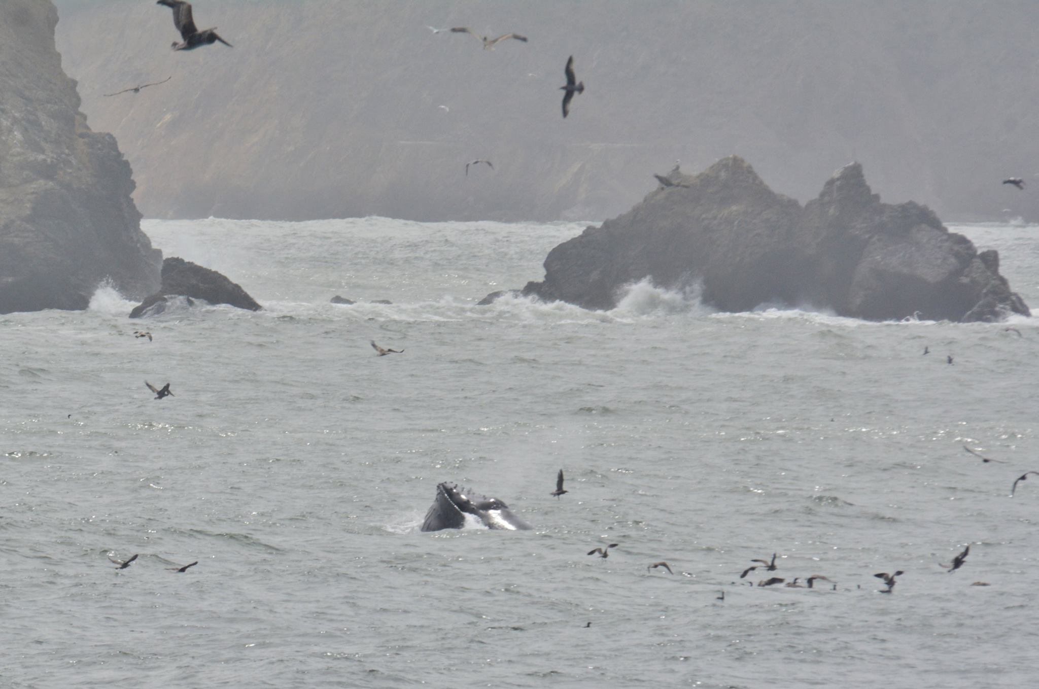 Pacifica Pier is where the whale action was today