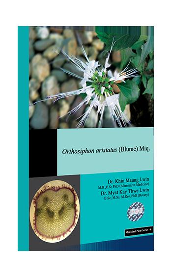 Orthosiphon