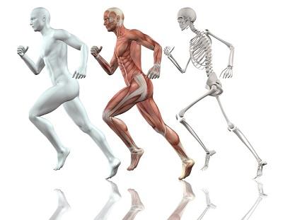 Anatomy and Physiology Diploma