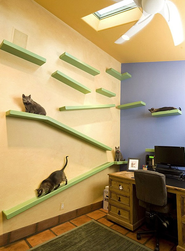 cat-friendly-house-2