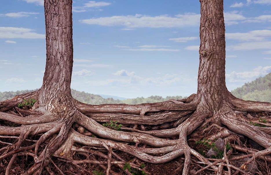 Учените: дърветата имат чувства, сприятеляват се и се грижат едно за друго!