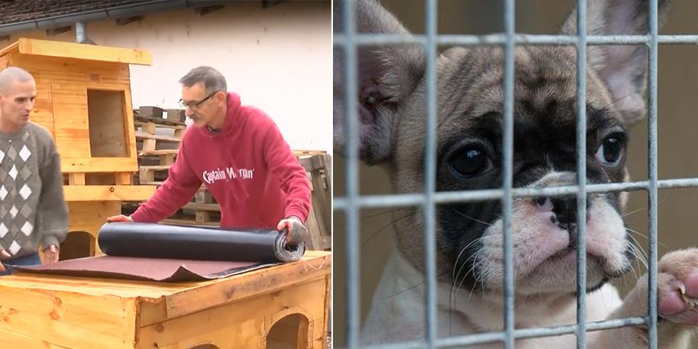 Доброволци построиха нови къщички за бездомните кученца в Русе! (Видео)
