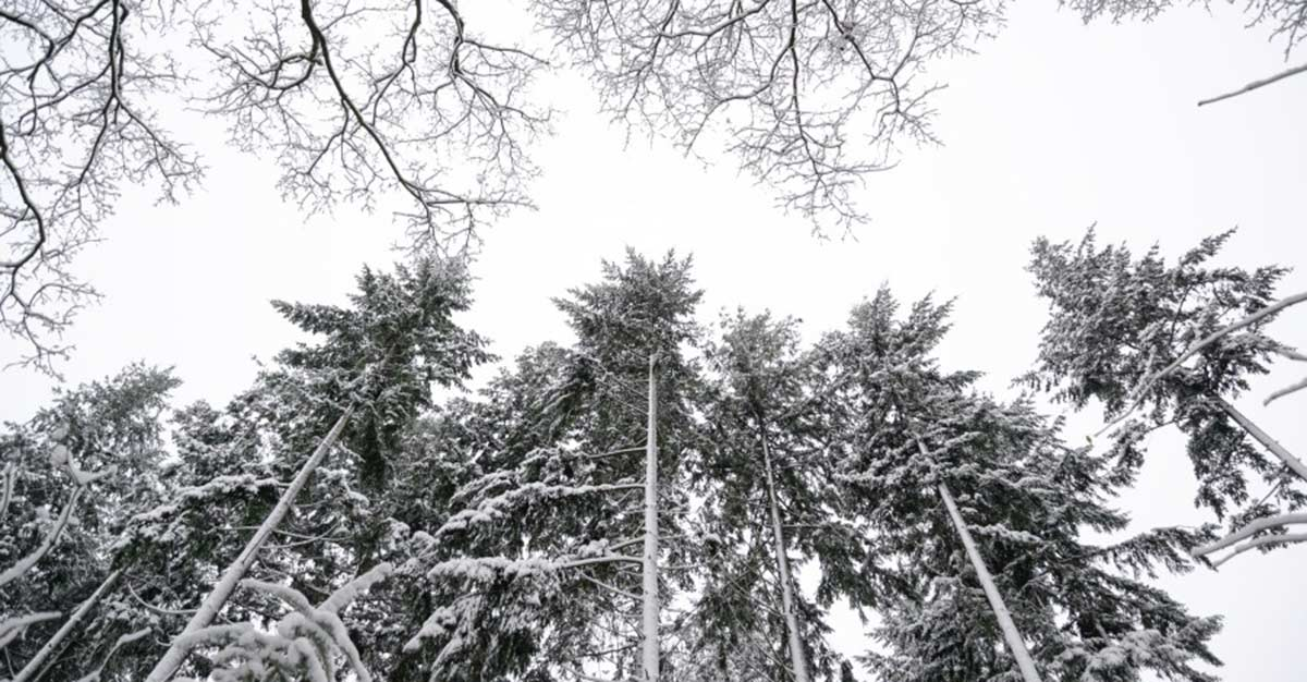 Protect Your Trees During Winter