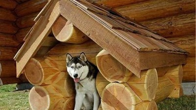 dog house building