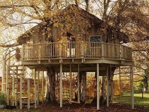 tree house building
