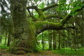 Maybe We Need To Hug More Trees