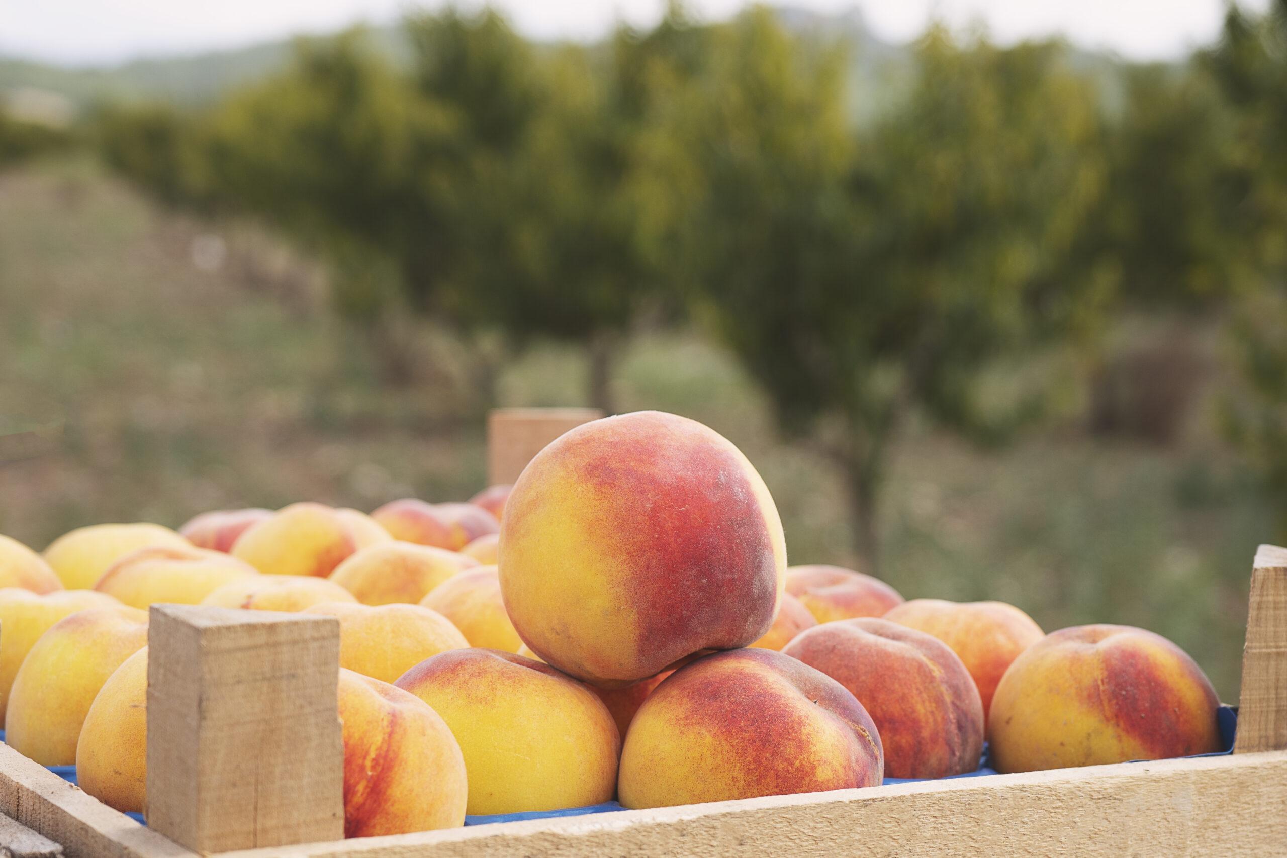 Explore Seasonal Healthy Eating