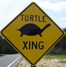 turtlexing